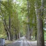 Aleja Vrelo Bosne