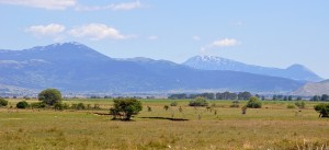 Livanjsko polje