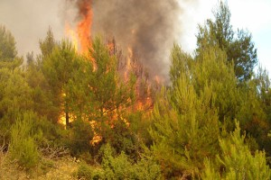 požar, Trebinje