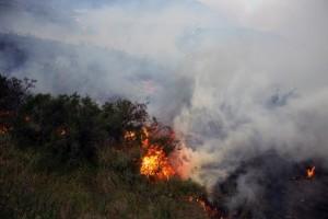 požar, šuma