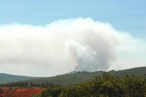 požar, BiH, šuma