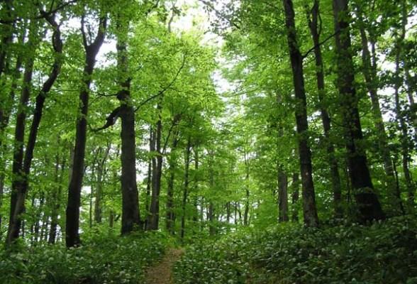 šuma, BiH, Bosna i Hercegovina