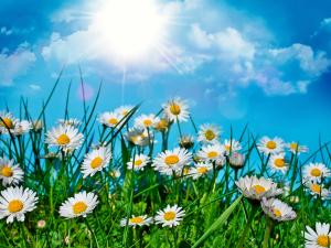 ljeto, sunce