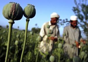 UN, Afganistan, opijum