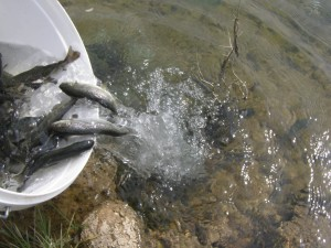 riba, poribljavanje