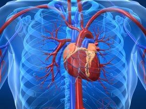 srce, srčani udar