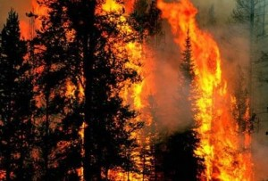 prirodne katastrofe