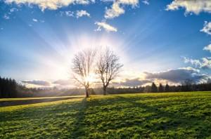 sunce. proljeće