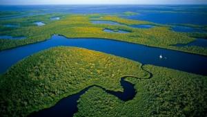 Amazonija