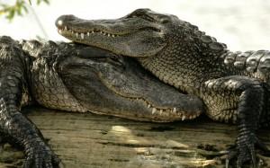 Prirodni park krokodila