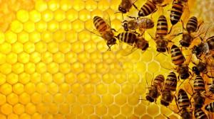 Propolis, pčele, med
