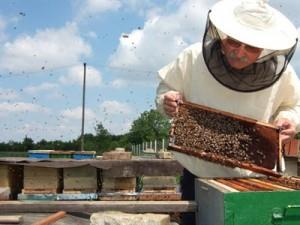 med,  pčelari