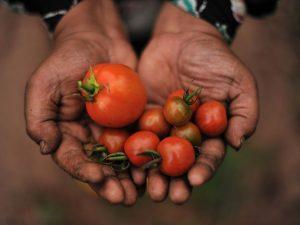 organska hrana poljoprivreda