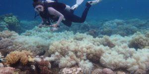 Mljet, koraljni greben
