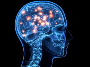 mozak, zdravlje, čovjek