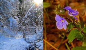 Fotografisano na Šehitlucima/Banj Brdu 14. januar 2017 i 7. januar 2018. Foto: Andrej Jovandić